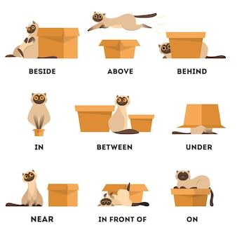 Juego de gato y caja. concepto de preposición de aprendizaje. animal arriba