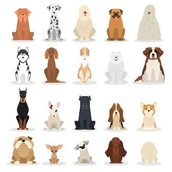 Juego de perros. colección de perros de varias razas.