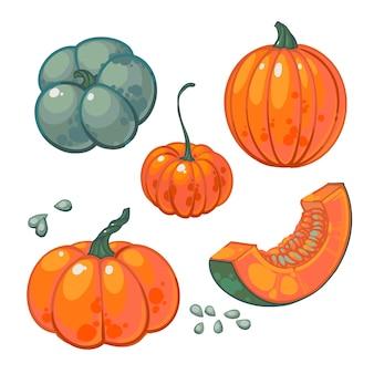 Jugosas calabazas maduras, ilustración de vectores dibujados a mano aislada sobre fondo blanco. cosecha
