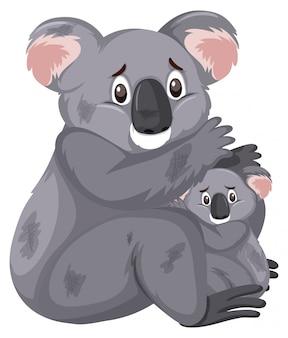 Koalas tristes en blanco