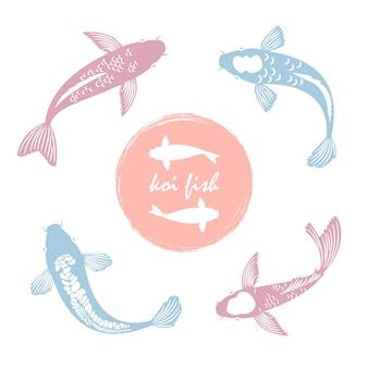 Koi pez japonés en blanco