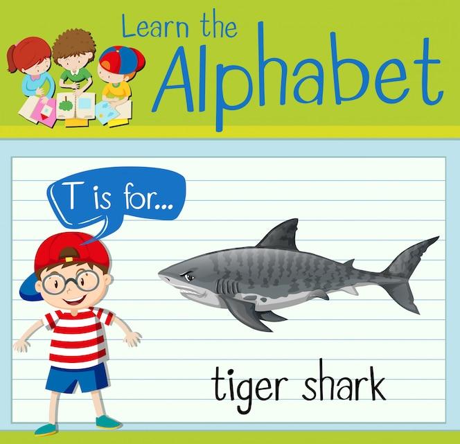 La letra t de la flashcard es para el tiburón tigre