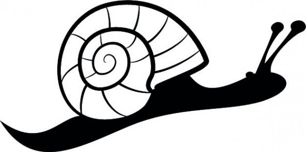 Lado caracol