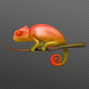 Lagarto camaleón verde naranja sentado en la rama