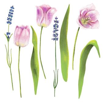 Lápiz dibujado a mano set de tulipanes y flores de lavanda