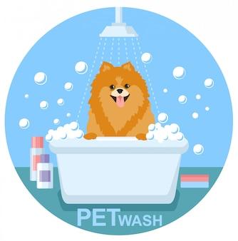 Lavado de mascotas. lavado de perros, solución de cuidado de la salud de mascotas.
