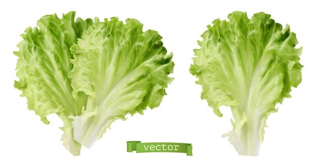 Lechuga. vegetal de hoja, 3d realista