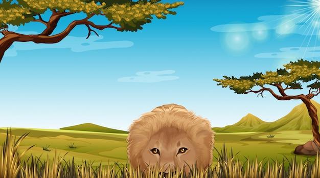 Un león en la escena de la sabana.