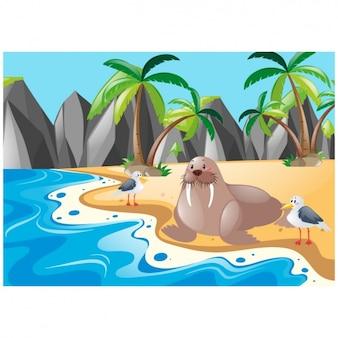 León marino en una isla
