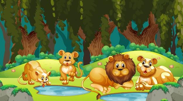 Leones en escena de la jungla