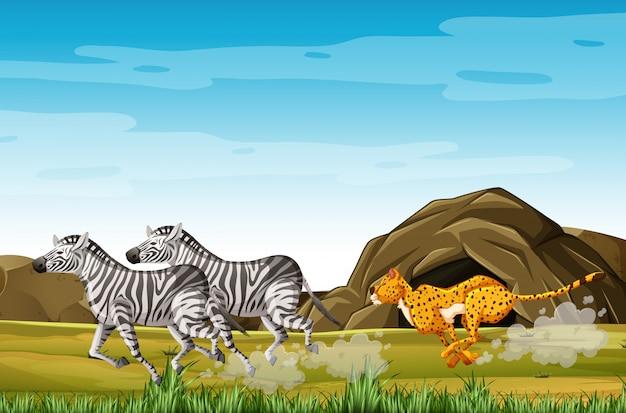 Leopardo cazando cebras en personaje de dibujos animados en el fondo del bosque