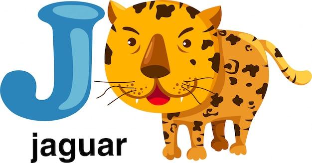 Letra del alfabeto animal - j