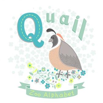 Letra q - codorniz