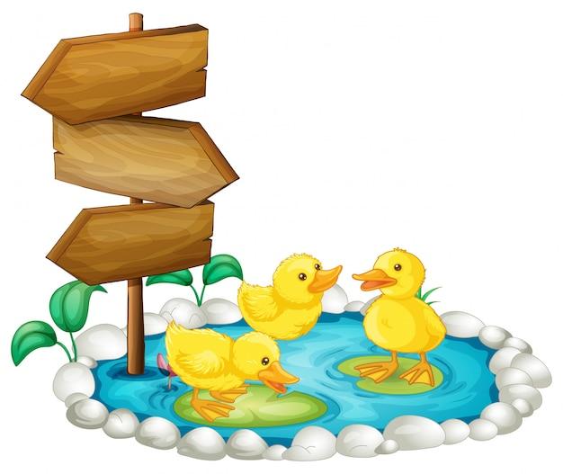 Letrero de madera y patos en el estanque