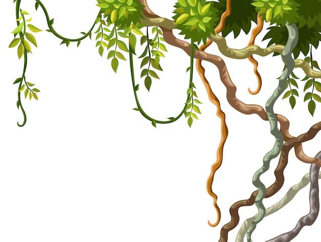 Liana rama y marco de hojas.
