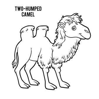 Libro de colorear para niños, camello de dos jorobas