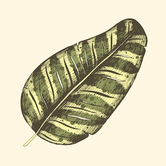 Licencia de palma tropical, selva, hojas