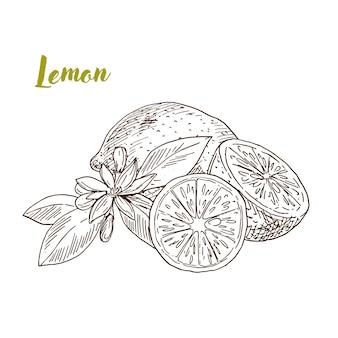Limones dibujados a mano, rebanada y flor