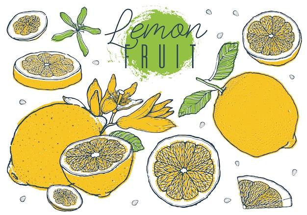 Limones de la fruta fijados a mano colorido boceto dibujado.