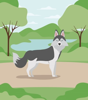 Linda mascota perro huski siberiano en el campamento