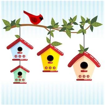 Linda rama con casas de pájaros y cardenal rojo.
