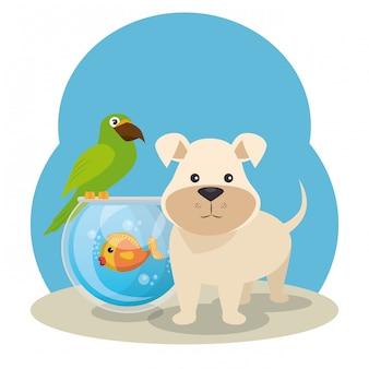 Lindas mascotas de la tienda de mascotas