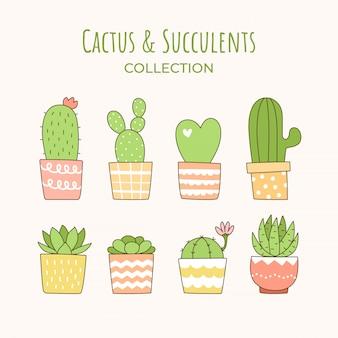 Lindo cactus y suculenta colección.