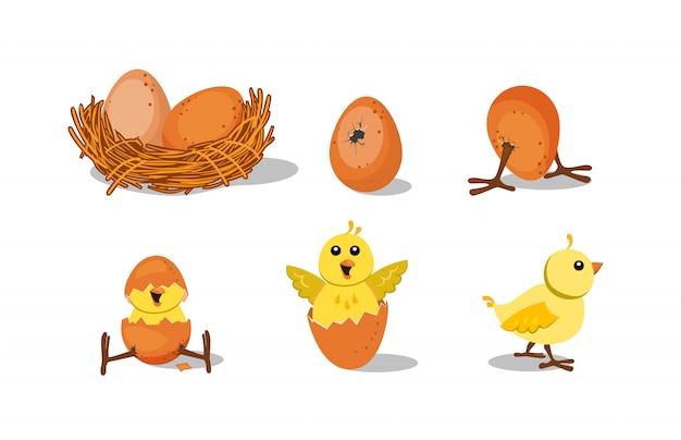 Lindo conjunto para incubar pollitos