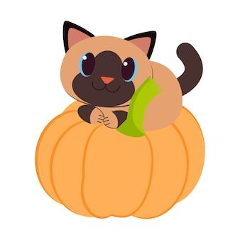 El lindo gato con la calabaza.