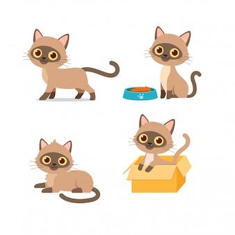 Lindo gato mascota animal jugando pose estilo conjunto paquete