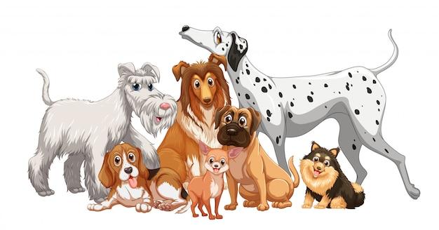 Lindo grupo de perros animales aislado sobre fondo blanco.