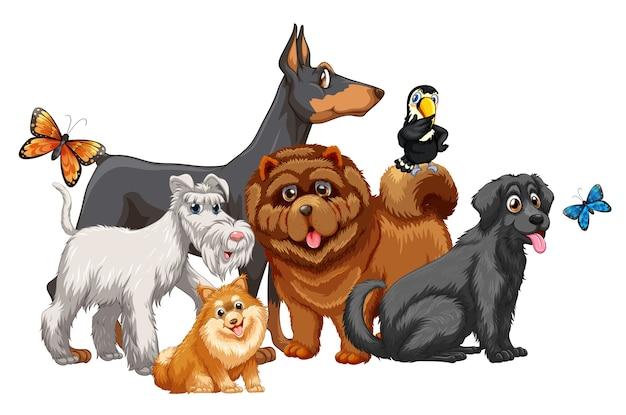 Lindo grupo de perros animales aislado