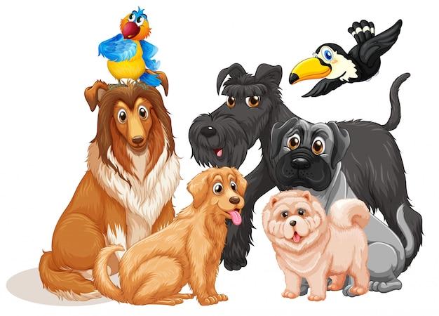 Lindo grupo de perros animales sobre fondo blanco