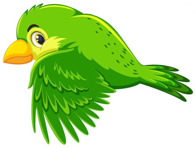 Lindo pájaro verde volando