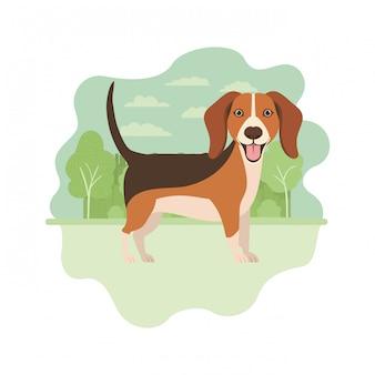 Lindo perro beagle en blanco