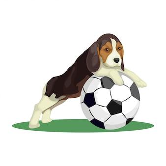 Lindo perro beagle jugando con ilustración de fútbol
