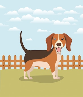 Lindo perro beagle mascota en el campamento