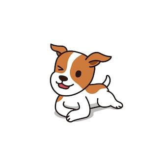 Lindo perro jack russell terrier