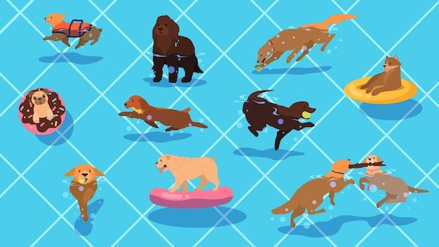 Lindo perro de raza pura divertido en la piscina. perro en piscina con anillo y bola inable. perros divirtiéndose en el agua.