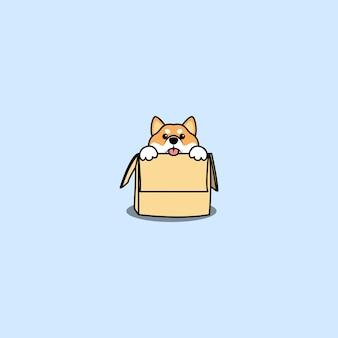 Lindo perro shiba inu en la caja