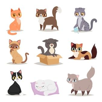Lindo personaje de gatos pose diferente