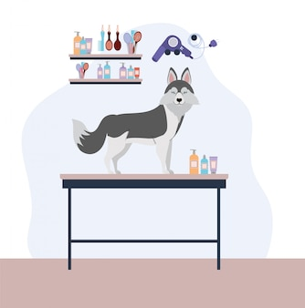 Lindo personaje de mascota de perro huski siberiano