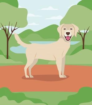 Lindo personaje de mascota de perro labrador retriever en el campamento
