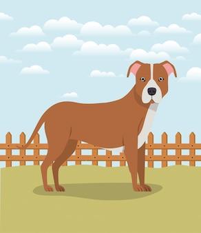 Lindo personaje de mascota de perro pitbull en el campamento