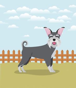 Lindo personaje de mascota de perro schnauzer en el campamento
