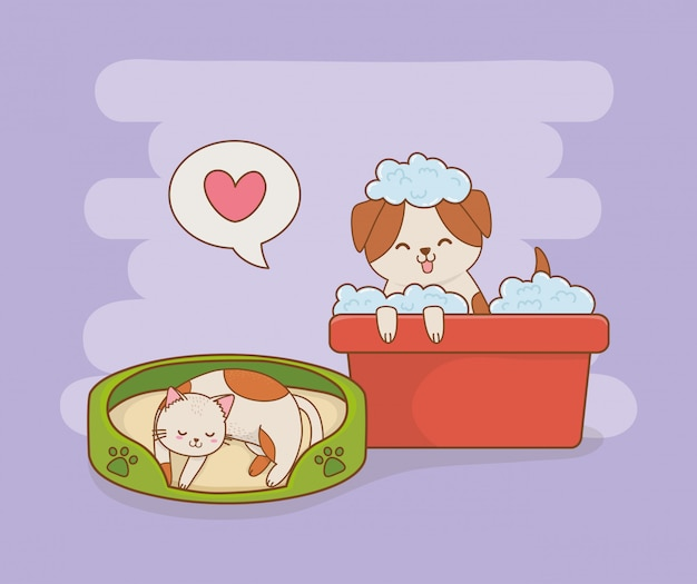 Lindos perritos y mascotas de gatitos.