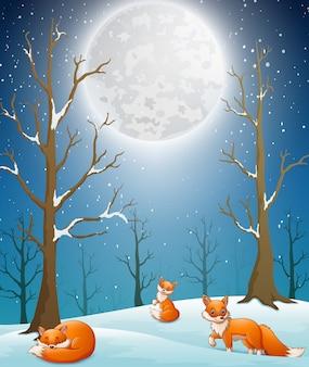 Lindos zorros de invierno disfrutando de la nieve que cae por la noche