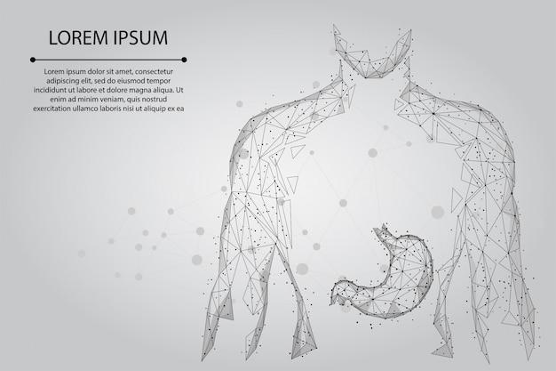Línea de puré y punto hombre silueta estómago sano puntos conectados low polyframe. bajo poli