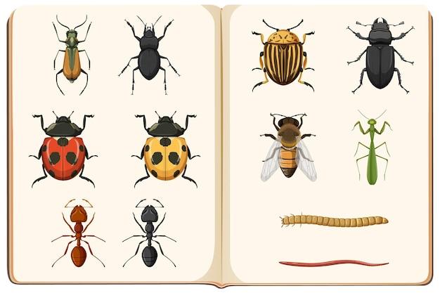 Lista de entomología de la colección de insectos.
