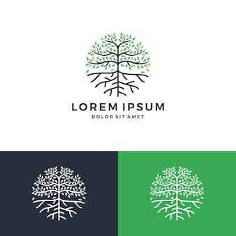 Logotipo de árbol y raíz